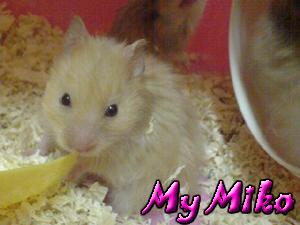 mymiko